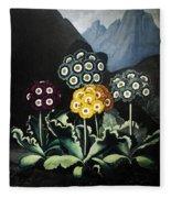 Thornton: Auriculas Fleece Blanket