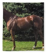 Thoroughbred Stallion Fleece Blanket