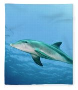 three year old Dolphin  Fleece Blanket