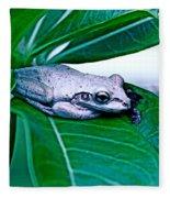 Tree Frog On Desert Rose  Fleece Blanket