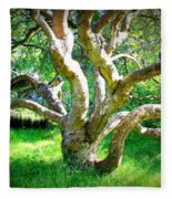 Tree In Golden Gate Park Fleece Blanket