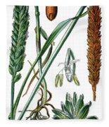 Wheat, Triticum Vulgare Fleece Blanket