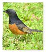 White-rumped Shama Fleece Blanket