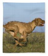 Wirehaired Vizsla Running Fleece Blanket