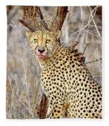1022 Cheetah Fleece Blanket
