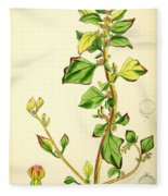 Illustrations Of The Flowering Plants And Ferns Of The Falkland Islands Fleece Blanket