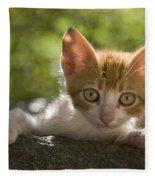 Kitten On A Wall Fleece Blanket