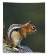 Golden-mantled Ground Squirrel Fleece Blanket