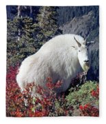1m4900 Mountain Goat Near Mt. St. Helens Fleece Blanket