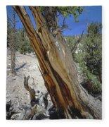 1n6956 Methuselah Tree Fleece Blanket
