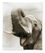 African Elephant Closeup Square Fleece Blanket