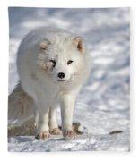 Arctic Fox... Fleece Blanket