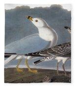 Audubon: Gull Fleece Blanket