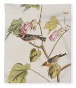 Bay Breasted Warbler Fleece Blanket