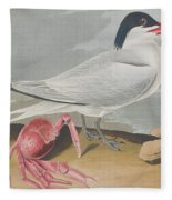 Cayenne Tern Fleece Blanket