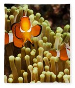 Clown Anemonefish Fleece Blanket