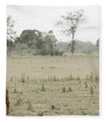 Country Cow Fleece Blanket