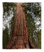 Giant Sequoia Trees Fleece Blanket