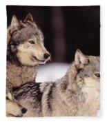 Gray Wolves Fleece Blanket