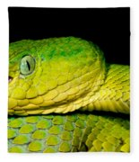 Guatemala Palm Pitviper Fleece Blanket