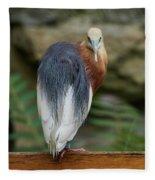 Javan Pond Heron At Zoo Berlin Fleece Blanket