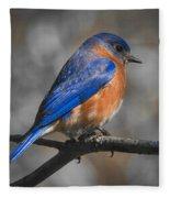 Male Eastern Bluebird Fleece Blanket