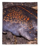 Mexican Burrowing Toad Fleece Blanket