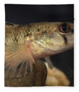 Mobile Logperch Percina Kathae Fleece Blanket