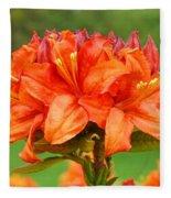 Office Art Prints Azaleas Botanical Landscape 11 Giclee Prints Baslee Troutman Fleece Blanket