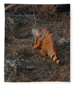 Orange Iguana Fleece Blanket