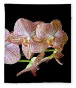 Orchid Phalaenopsis Flower Fleece Blanket