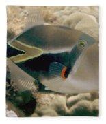 Picasso Triggerfish Fleece Blanket