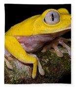 Red-eyed Treefrog, Xanthic Form Fleece Blanket