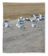 Ring Billed Gulls  Fleece Blanket