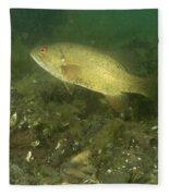 Smallmouth Bass Protecting Eggs Fleece Blanket