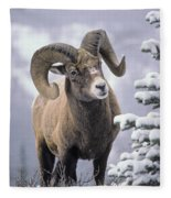 25084, Bighorn Sheep, Winter, Jasper Fleece Blanket
