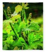 2629- Comsrock Winery Fleece Blanket
