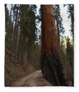 Giant Sequoia Trees Fleece Blanket