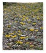2d07512 Prairie Zinnia In Lost River Range Fleece Blanket