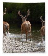 3 Bucks Fleece Blanket
