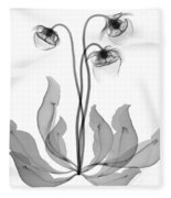 Pitcher Plant Flowers, X-ray Fleece Blanket
