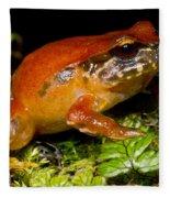 Rosy Ground Frog Fleece Blanket