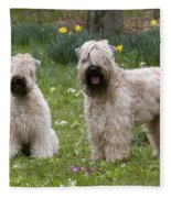 Soft-coated Wheaten Terriers Fleece Blanket