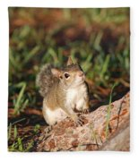 3- Squirrel Fleece Blanket