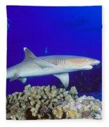 Whitetip Reef Shark Fleece Blanket