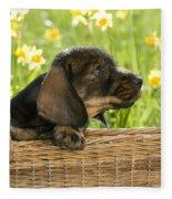 Wire-haired Dachshund Puppy Fleece Blanket
