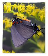 3398 - Butterfly Fleece Blanket