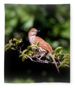 4979 - Brown Thrasher Fleece Blanket