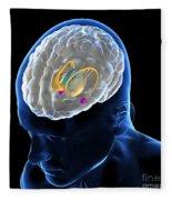 Anatomy Of The Brain Fleece Blanket