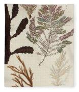 Aquatic Animals - Seafood - Algae - Seaplants - Coral Fleece Blanket